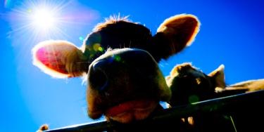45 ° mostra zootecnica Livigno 2012
